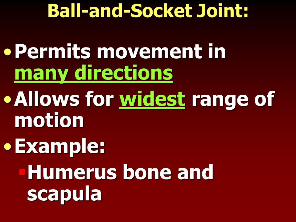 Ball-and-Socket Joint: