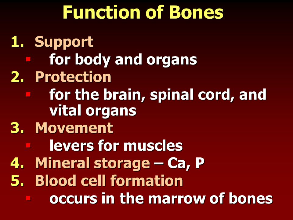 Function of Bones Support for body and organs Protection