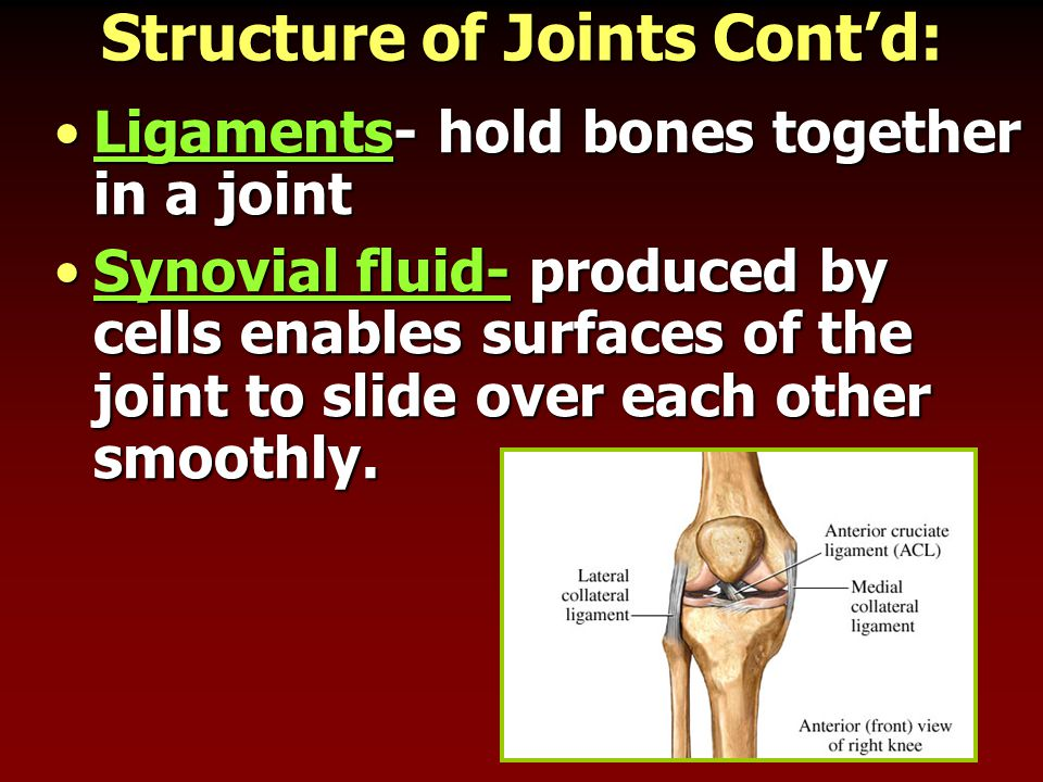 Structure of Joints Cont'd: