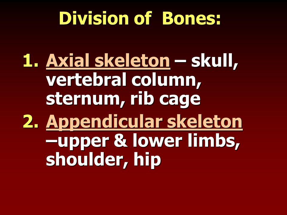 Division of Bones: Axial skeleton – skull, vertebral column, sternum, rib cage.