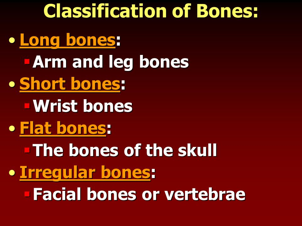 Classification of Bones: