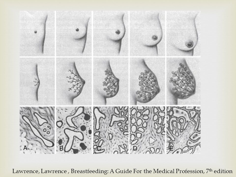 Lawrence, Lawrence , Breastfeeding: A Guide For the Medical Profession, 7th edition