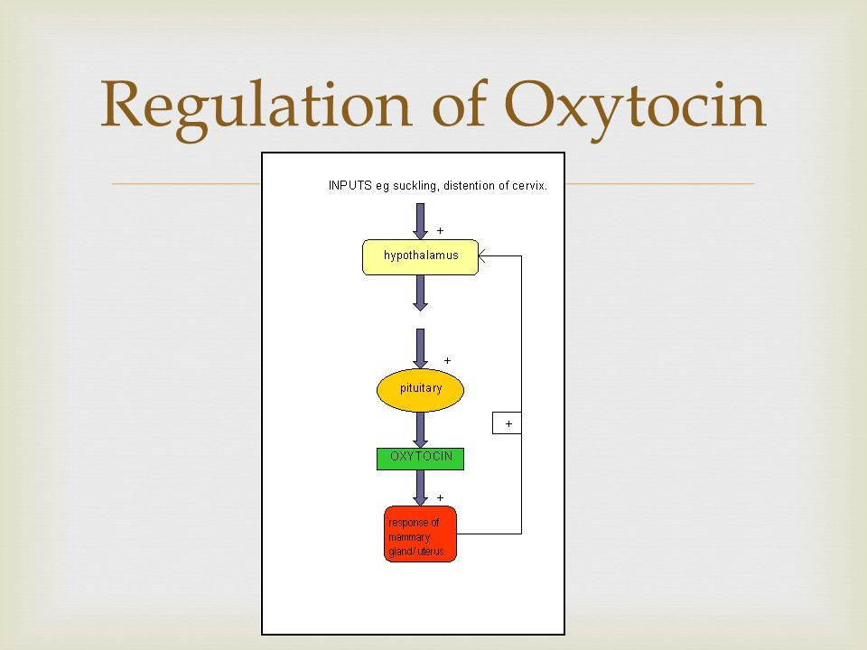 Regulation of Oxytocin