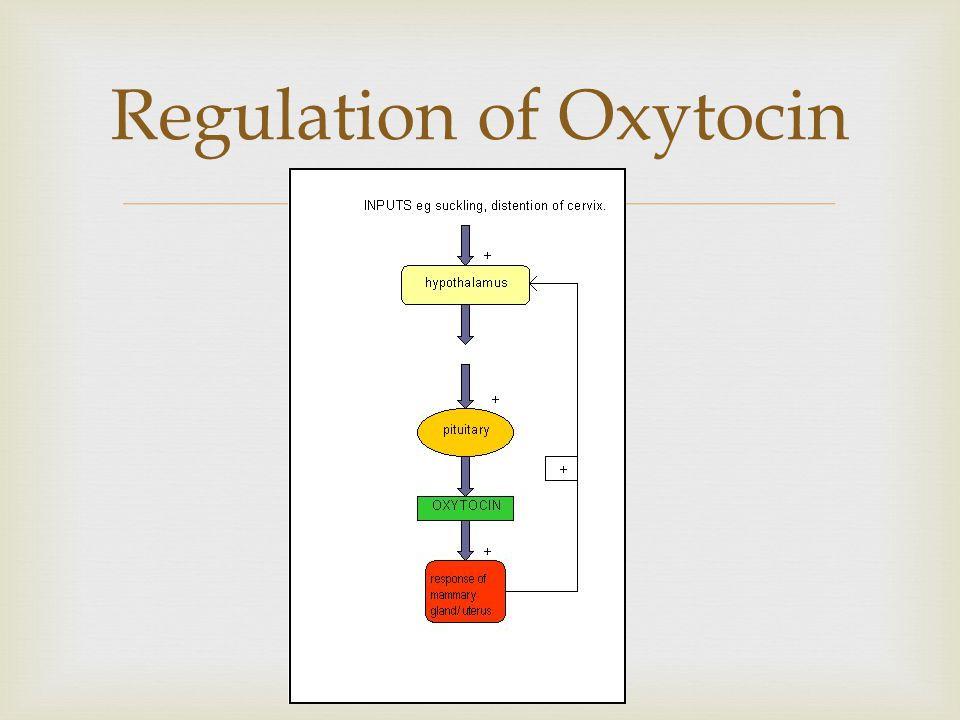 Regulation of Oxytocin