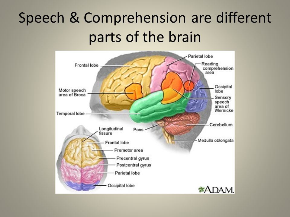 Speech & Comprehension are different parts of the brain