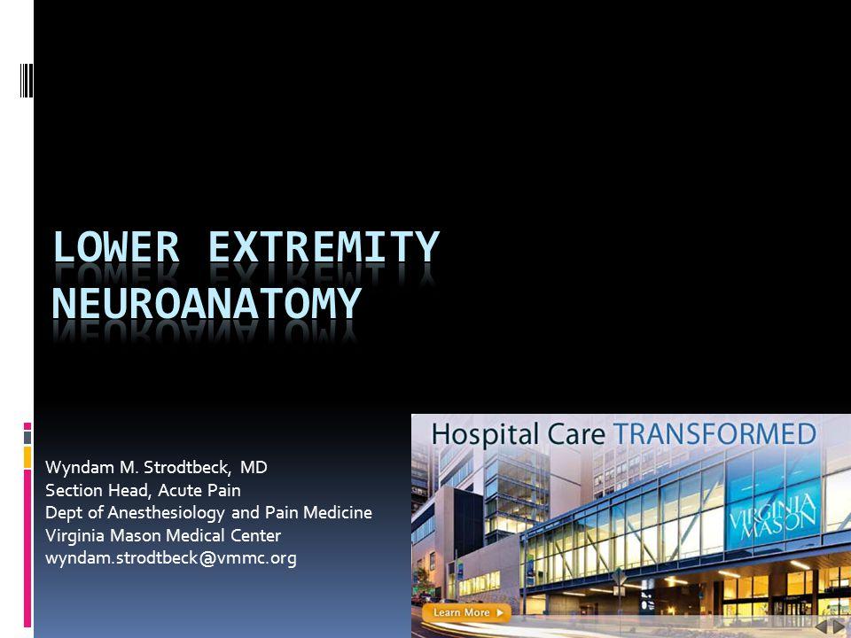 Lower extremity neuroanatomy