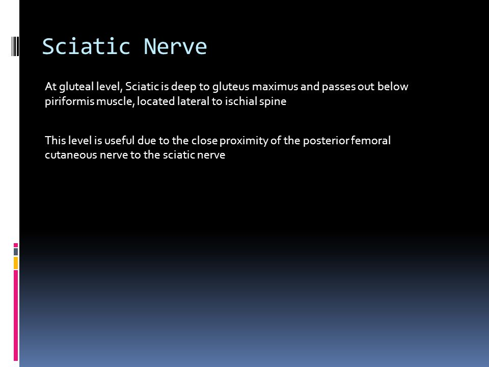 Sciatic Nerve At gluteal level, Sciatic is deep to gluteus maximus and passes out below piriformis muscle, located lateral to ischial spine.