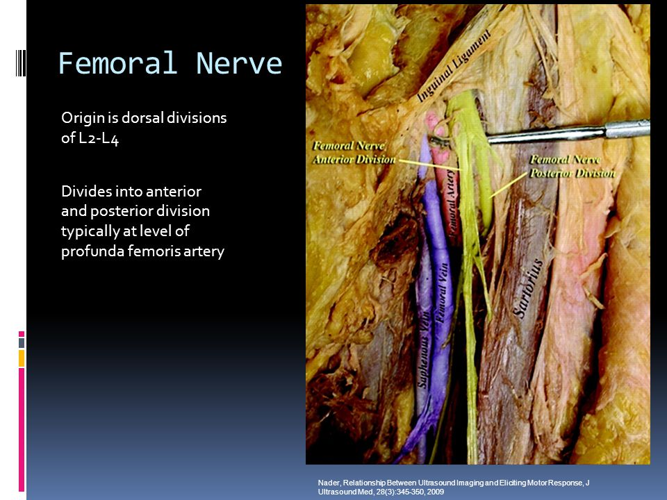 Femoral Nerve Origin is dorsal divisions of L2-L4