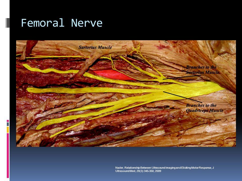 Femoral Nerve Nader, Relationship Between Ultrasound Imaging and Eliciting Motor Response, J Ultrasound Med, 28(3):345-350, 2009.