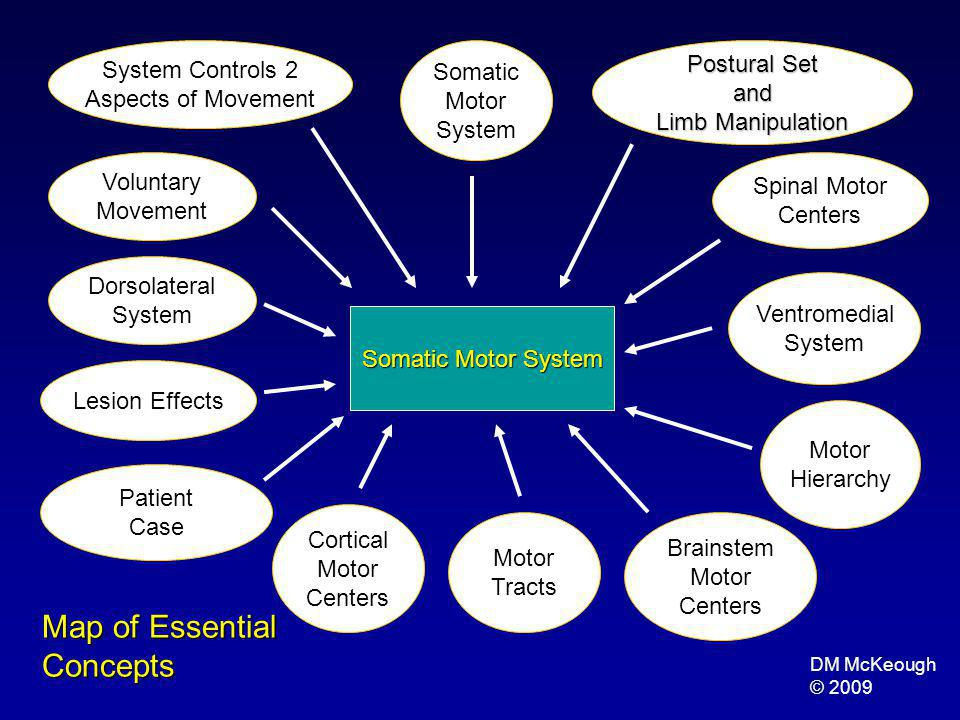 Map of Essential Concepts System Controls 2 Postural Set Somatic and