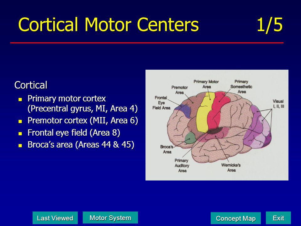 Cortical Motor Centers 1/5