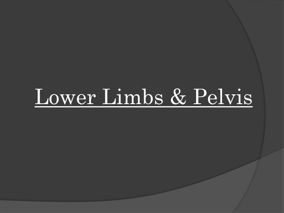 Lower Limbs & Pelvis