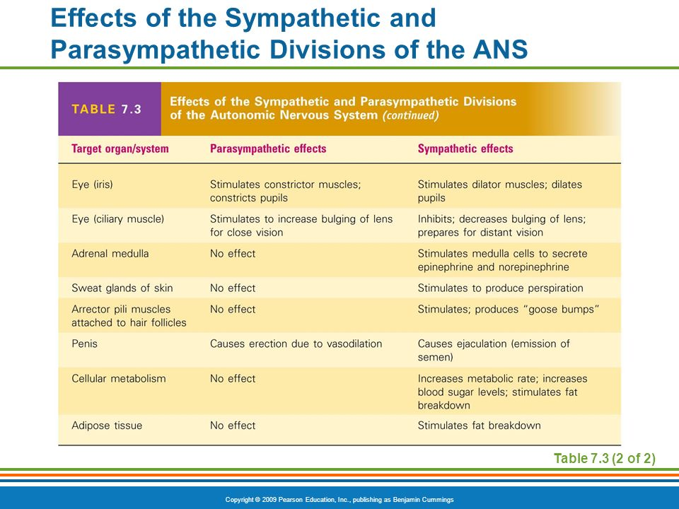 Effects of the Sympathetic and Parasympathetic Divisions of the ANS