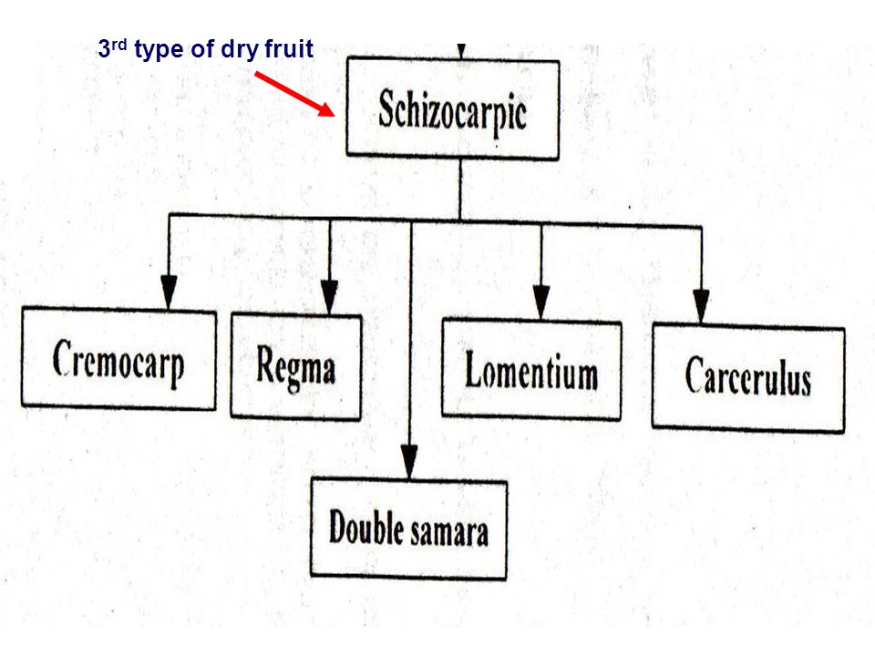 3rd type of dry fruit