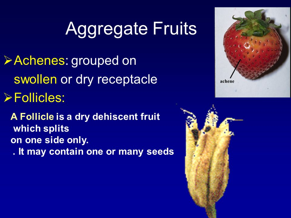 Aggregate Fruits Achenes: grouped on swollen or dry receptacle