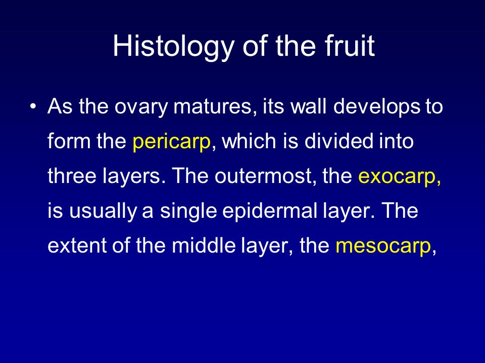 Histology of the fruit