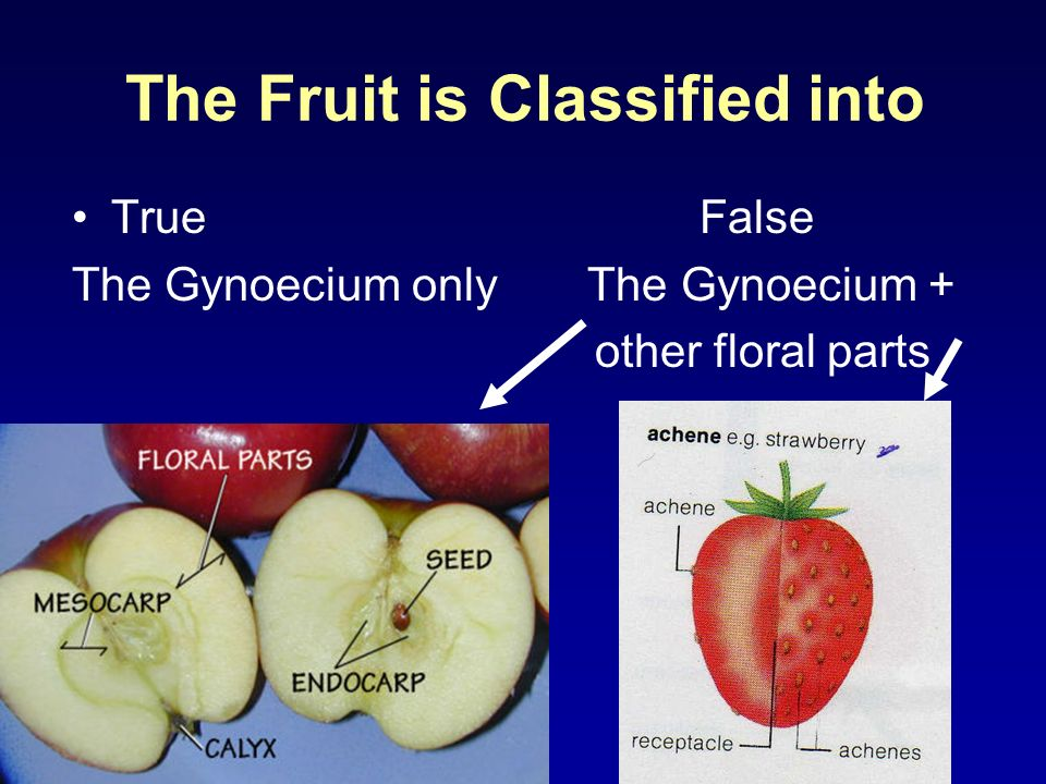 The Fruit is Classified into