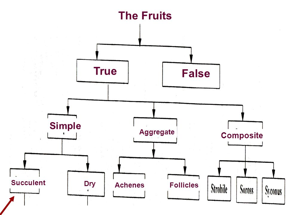 True False The Fruits True False The Fruits The Fruits Simple Simple
