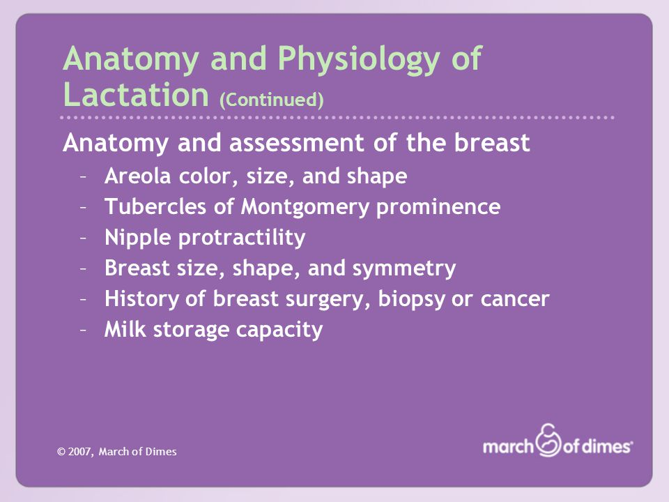 Anatomy and Physiology of Lactation (Continued)