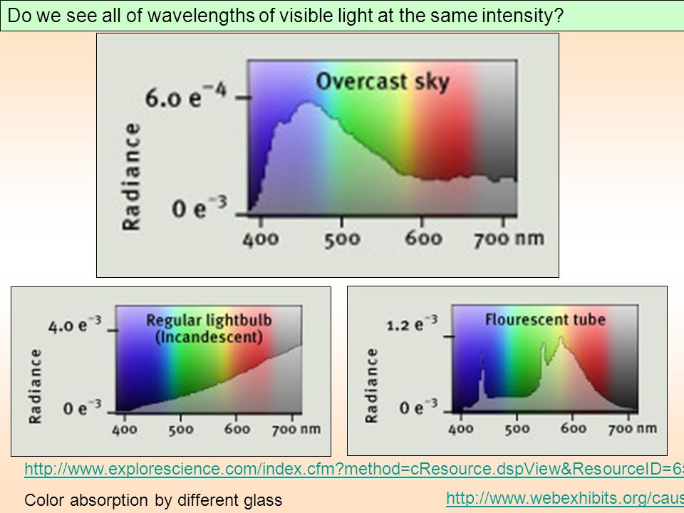 Do we see all of wavelengths of visible light at the same intensity