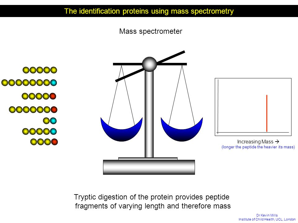 The identification proteins using mass spectrometry