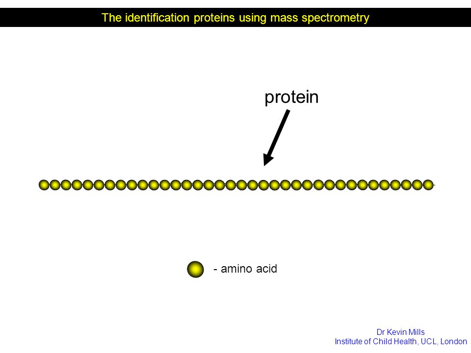 protein The identification proteins using mass spectrometry