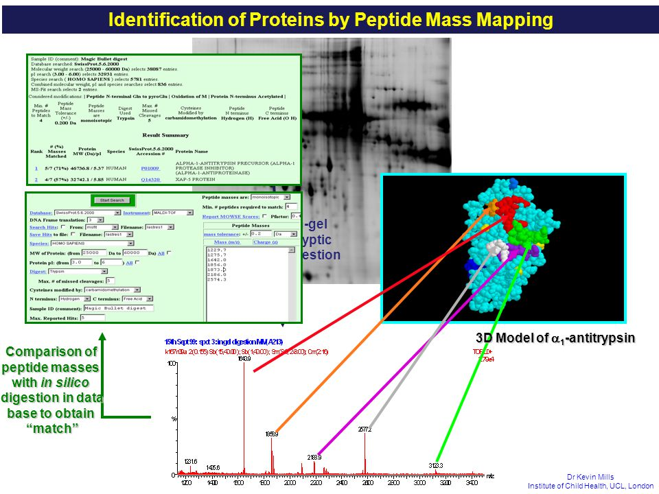 Identification of Proteins by Peptide Mass Mapping
