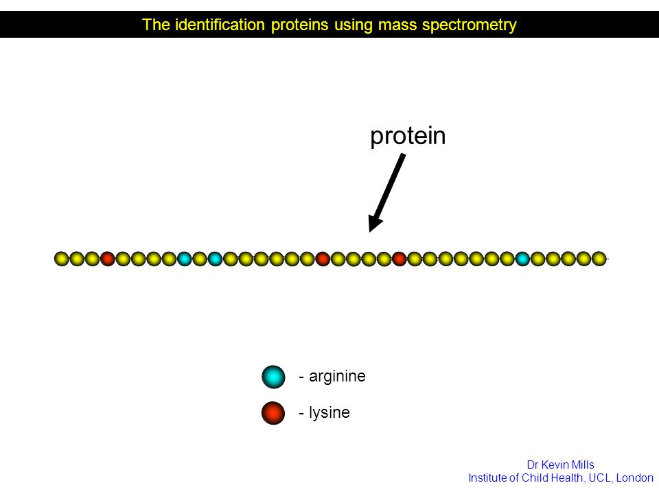 protein The identification proteins using mass spectrometry - arginine