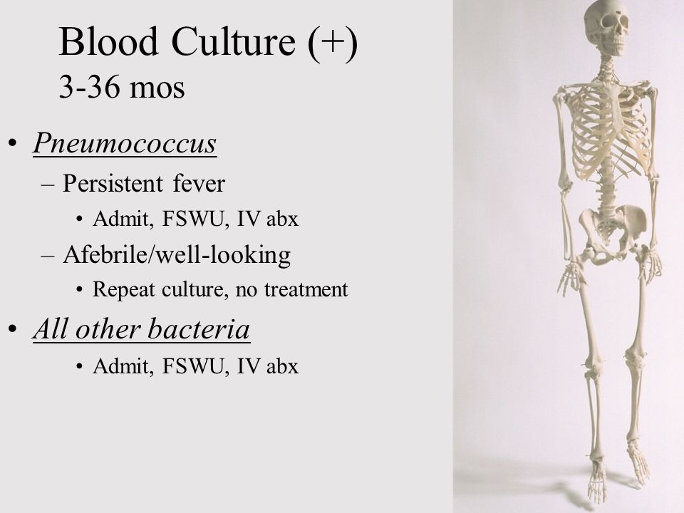 Blood Culture (+) 3-36 mos Pneumococcus All other bacteria