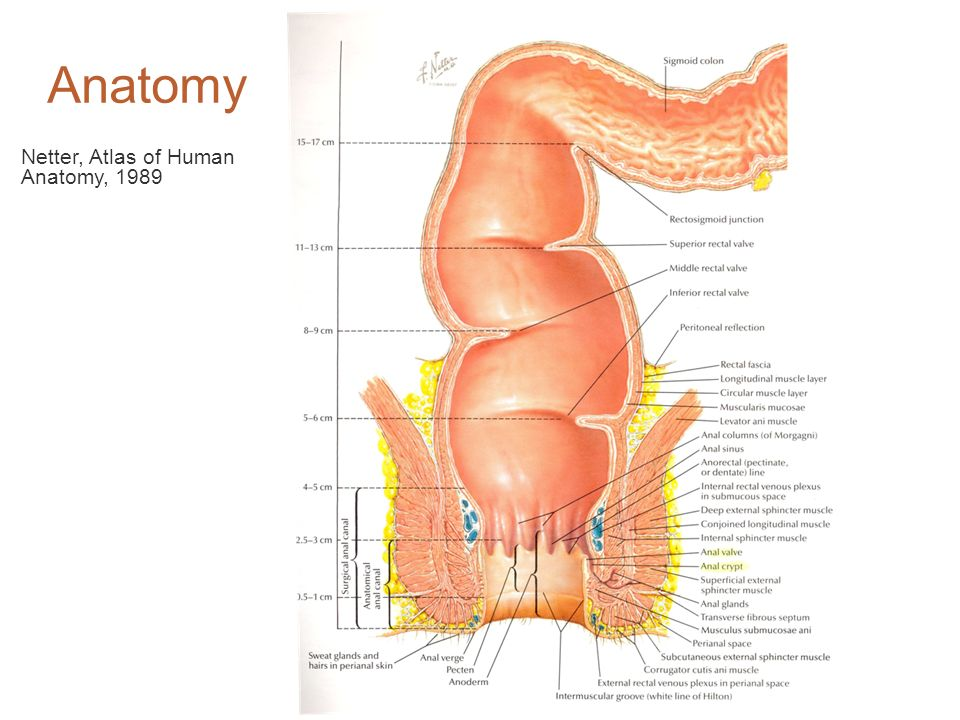Anatomy Netter, Atlas of Human Anatomy, 1989