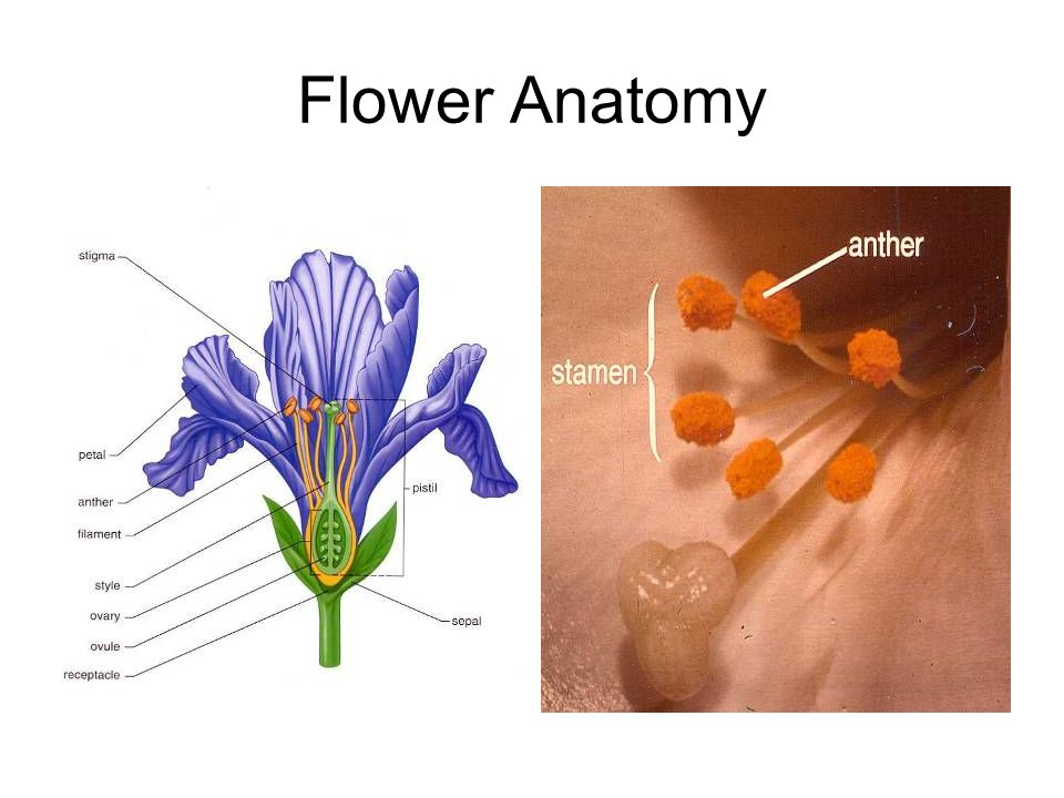 Flower Anatomy
