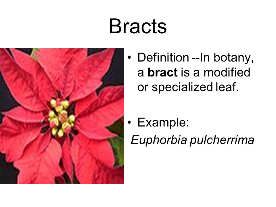 Bracts Definition --In botany, a bract is a modified or specialized leaf.