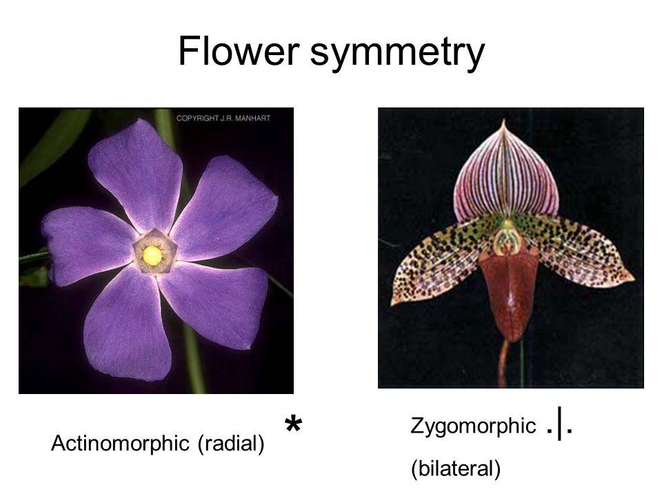 Flower symmetry Zygomorphic .|. (bilateral) Actinomorphic (radial) *