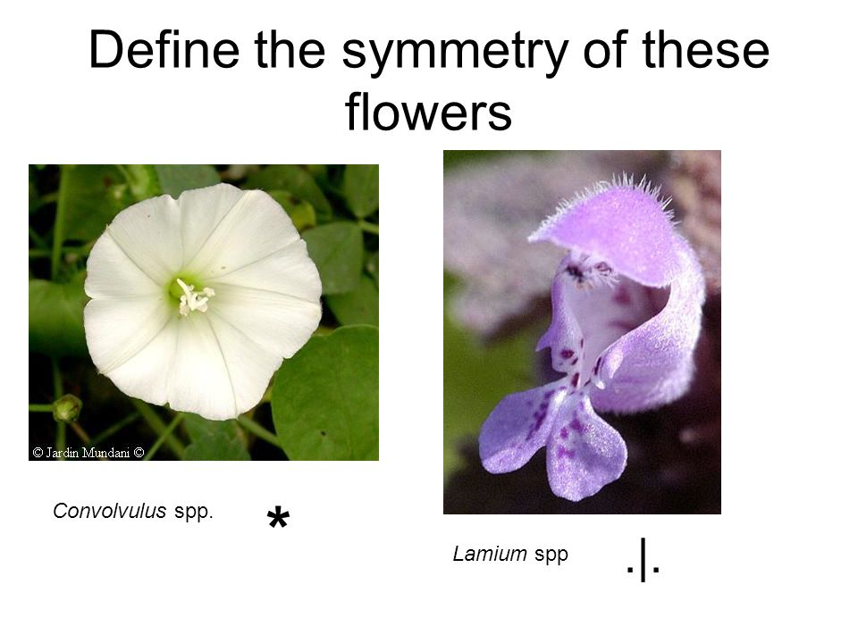Define the symmetry of these flowers