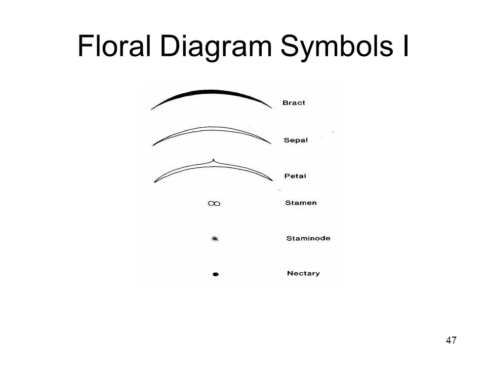 flower morphology