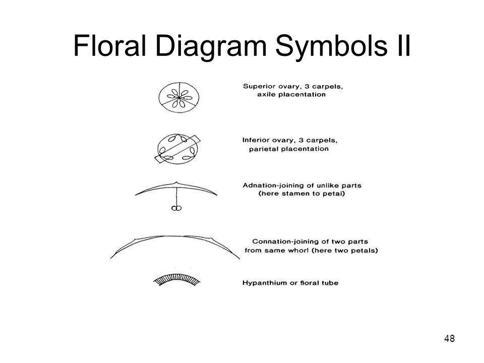 Floral Diagram Symbols II