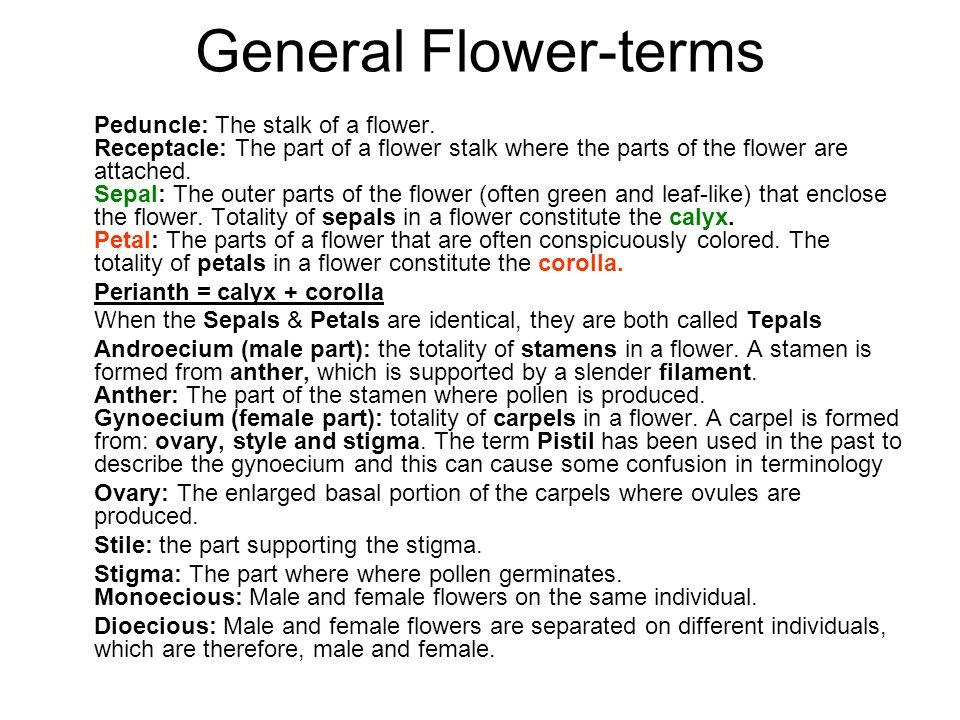 General Flower-terms