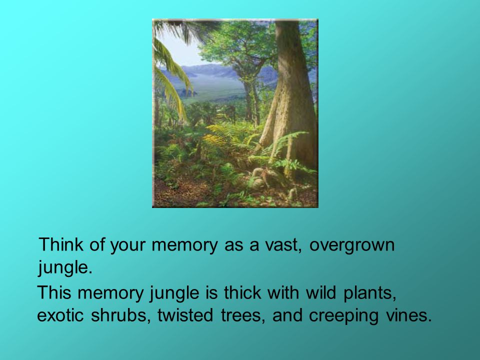 Think of your memory as a vast, overgrown jungle.