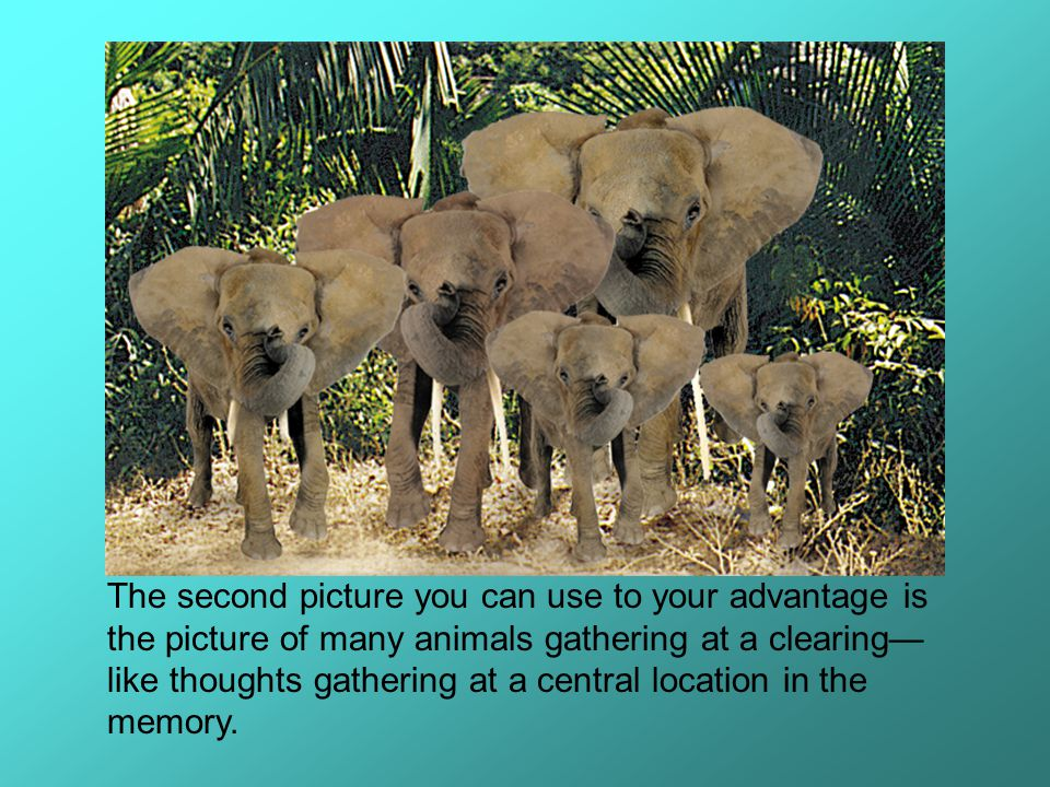 The second picture you can use to your advantage is the picture of many animals gathering at a clearing—like thoughts gathering at a central location in the memory.