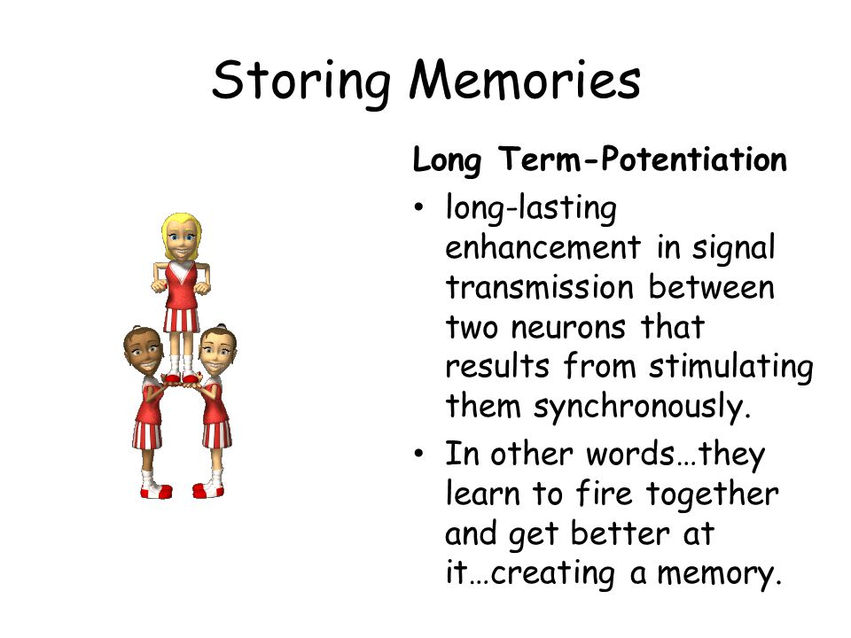 Storing Memories Long Term-Potentiation