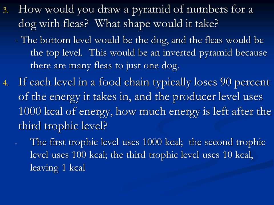 How would you draw a pyramid of numbers for a dog with fleas