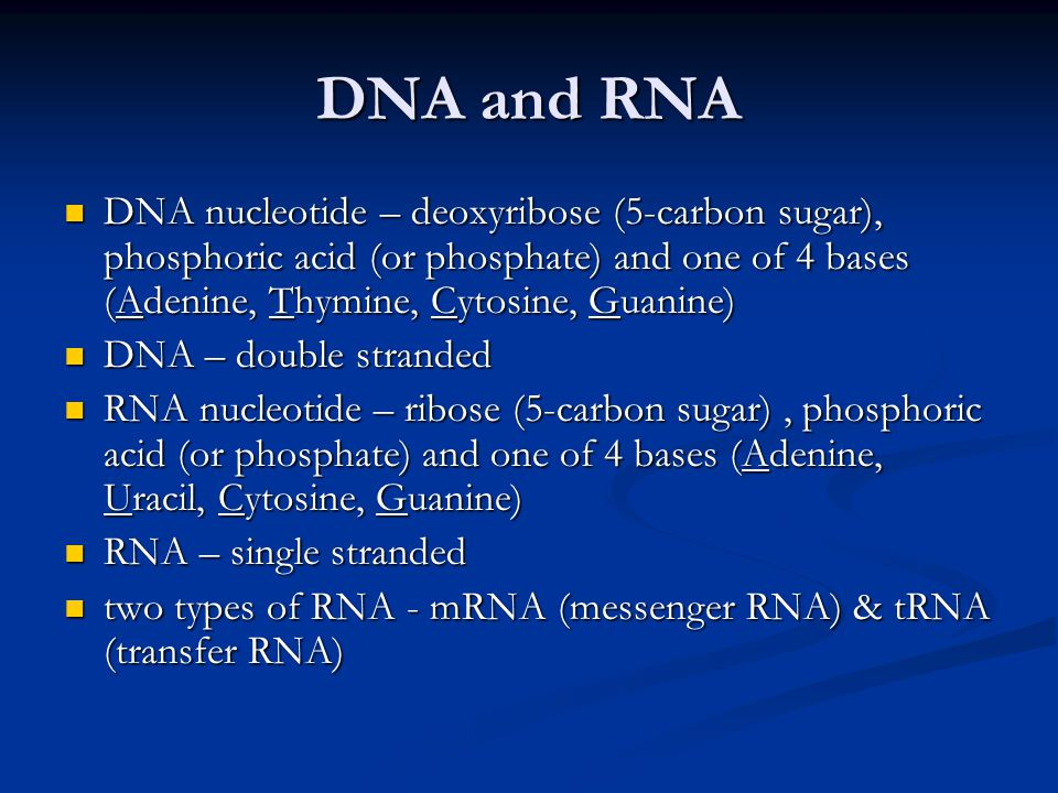 DNA and RNA DNA nucleotide – deoxyribose (5-carbon sugar), phosphoric acid (or phosphate) and one of 4 bases (Adenine, Thymine, Cytosine, Guanine)