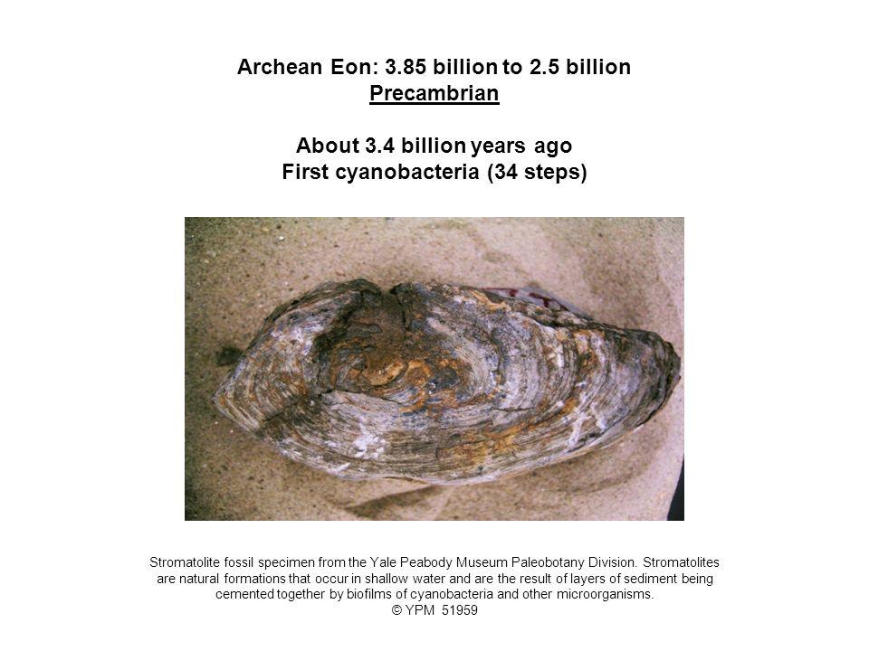 Archean Eon: 3. 85 billion to 2. 5 billion Precambrian About 3