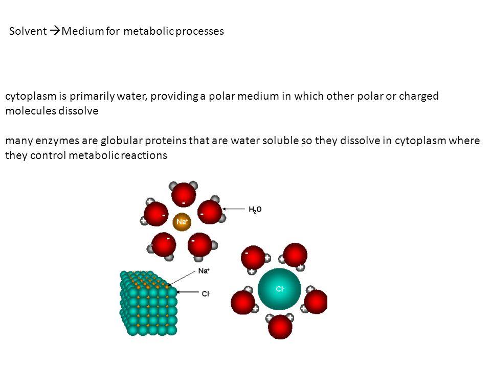 Solvent Medium for metabolic processes