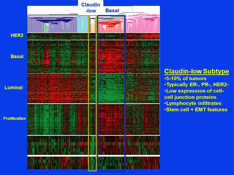 Claudin-low Subtype Claudin-low Basal 5-10% of tumors