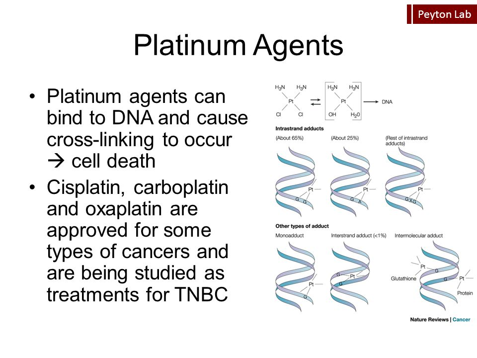 Platinum Agents Platinum agents can bind to DNA and cause cross-linking to occur  cell death.