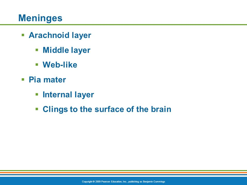 Meninges Arachnoid layer Middle layer Web-like Pia mater