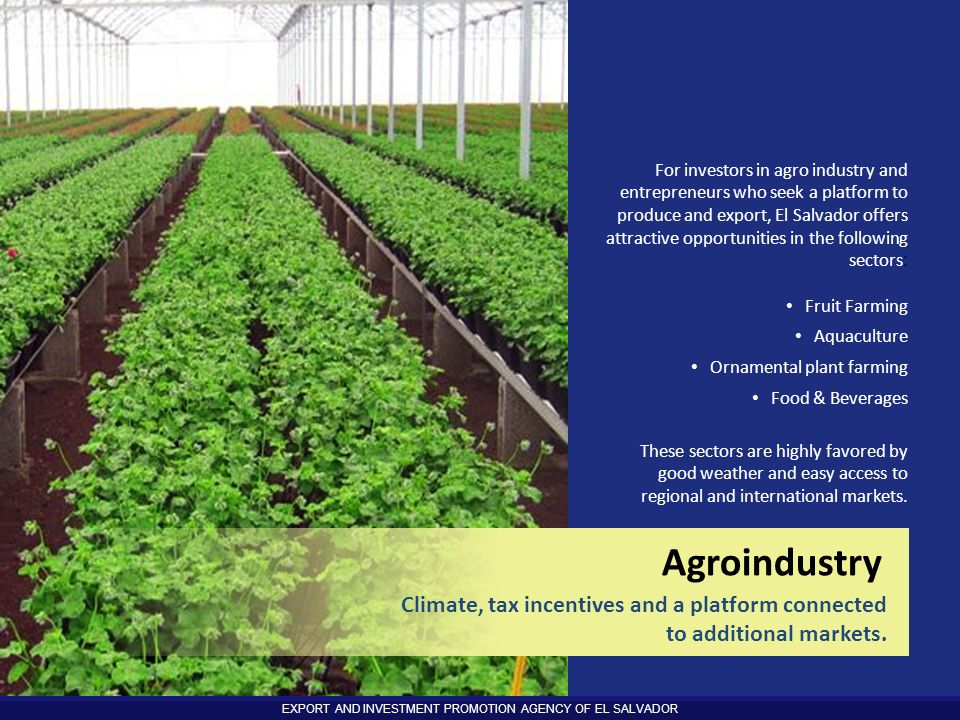For investors in agro industry and entrepreneurs who seek a platform to produce and export, El Salvador offers attractive opportunities in the following sectors: