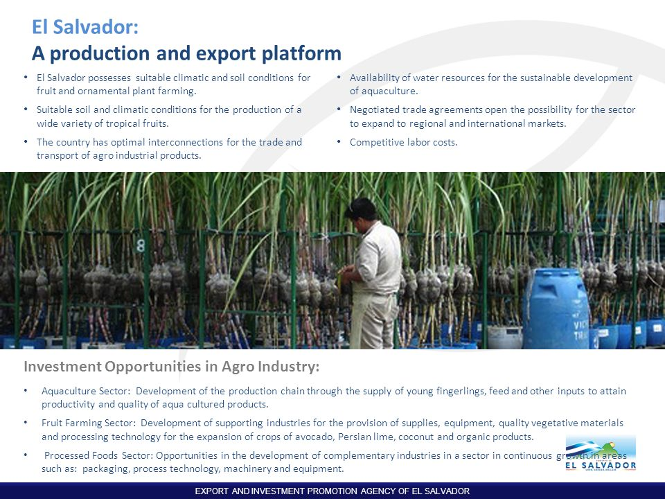 A production and export platform