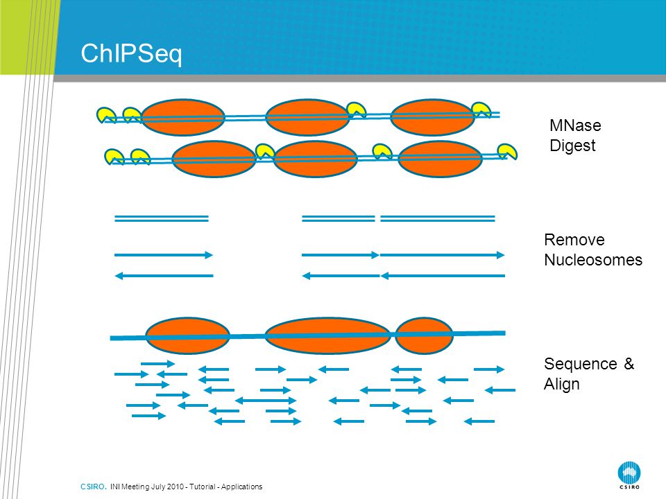 ChIPSeq MNase Digest Remove Nucleosomes Sequence & Align